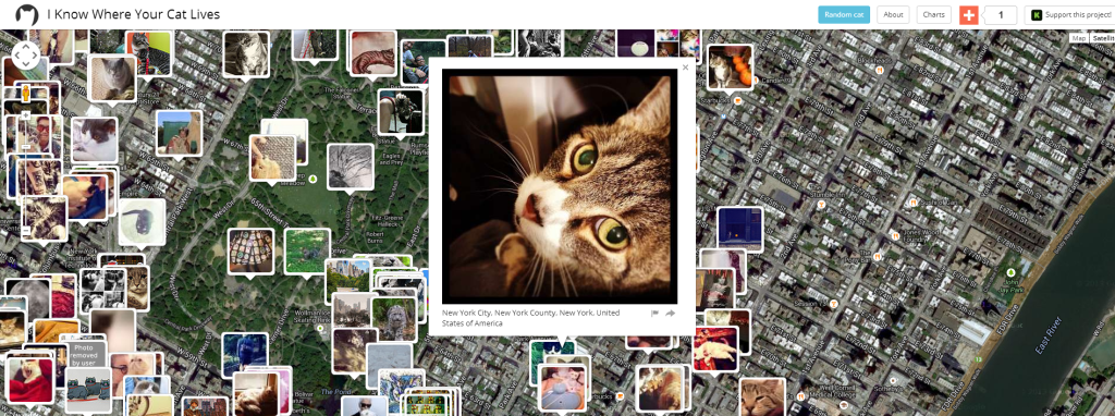I Know Where Your Cat Lives: Cat in New York City