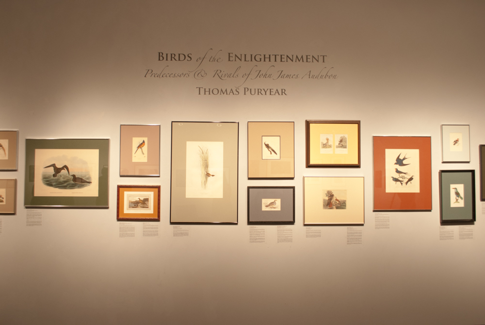 "Title of the exhibition ""Birds of the Enlightenment"""