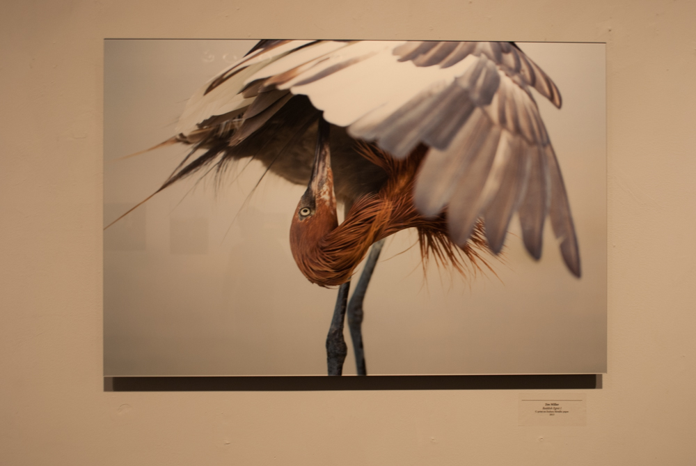 Frontal shot of a photograph of a bird