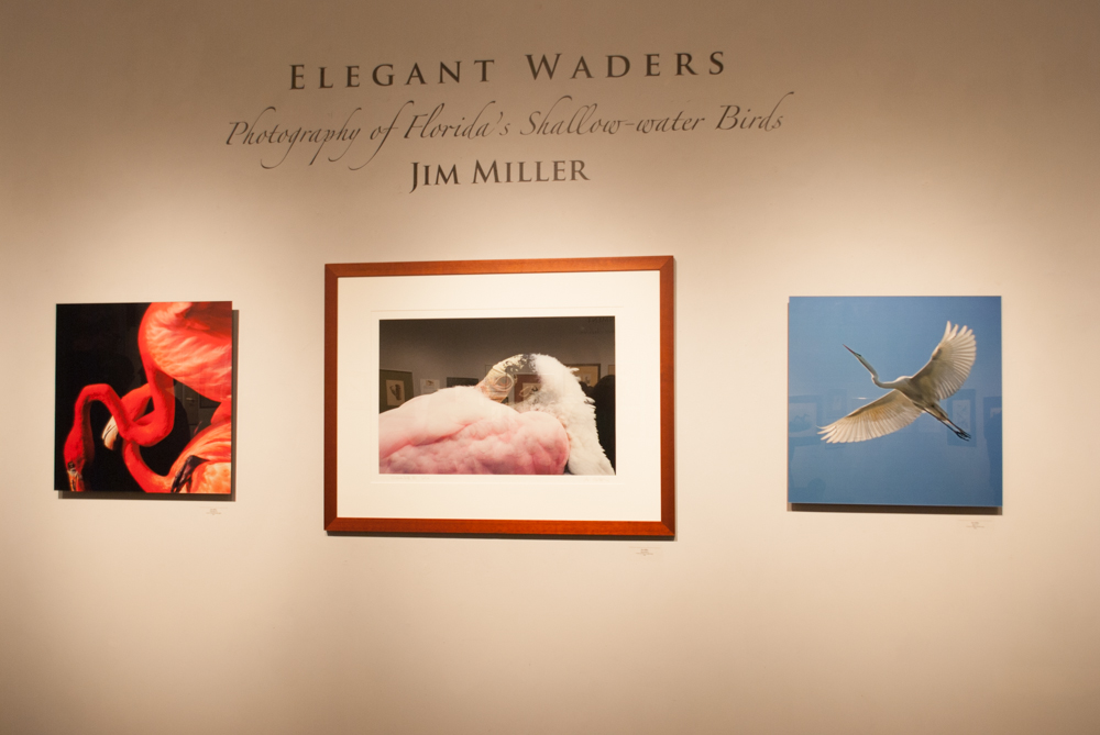 "Title of one of the exhibitions ""Elegant Waders"""
