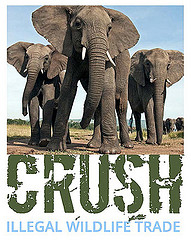 crushed ivory design challenge