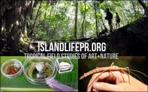 ISLAND LIFE: Tropical Field Studies of Art+Nature - MARCH 2015